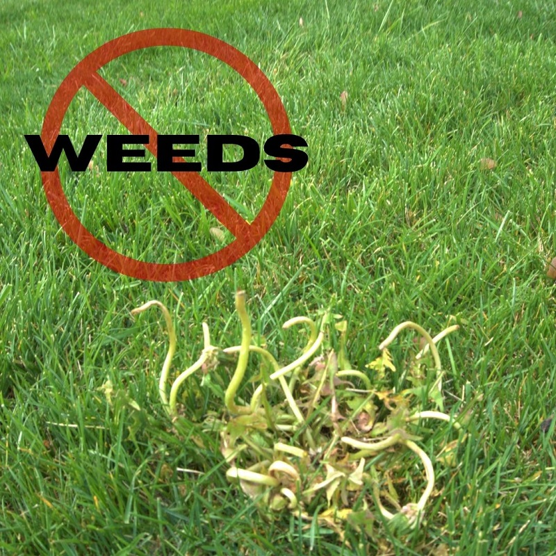 Turf Treatment Program is the long-term solution to eliminating weeds for good.